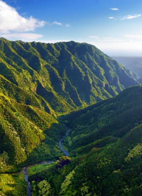 Hawaii luxury cruises - Kauai jungle