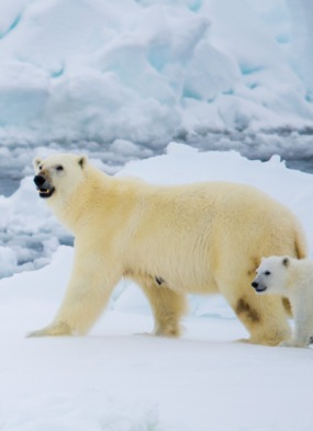Pole to Pole - The Ultimate Expedition Cruise from Mundy Adventures