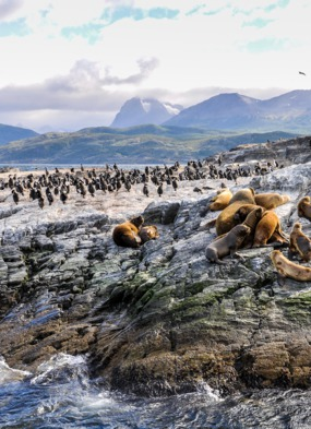 Chilean Fjords & Patagonia cruises - Seals in the Beagle Channel