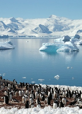 The White Continent - Penguin Colony, Antarctica