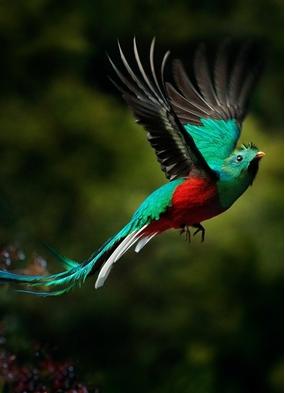 Costa Rica cruises - Resplendent quetzal