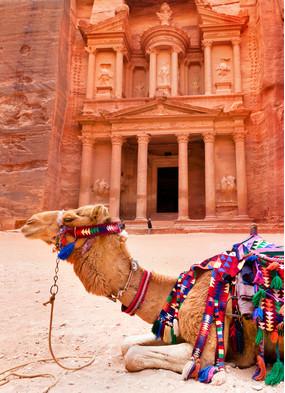 Camel outside Petra, Jordan