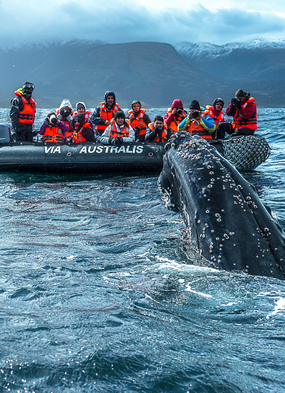 Australis expedition cruise in Patagonia, one of the world's best whale watching destinations