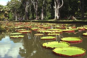 Pamplemousses Botanical Gardens, Mauritius