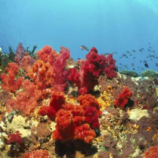 Vamizi Coral