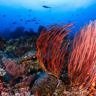 Colourful Wakatobi Reef