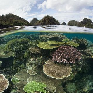 shallow coral reef, Raja Ampat