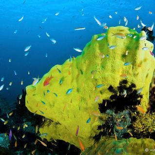coral reef papua new guinea