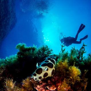 nudibranch gozo