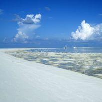 Tubbataha Reef Sandbank