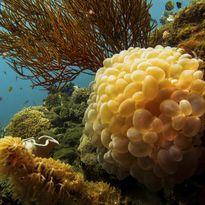 Coral, Komodo, Indonesia