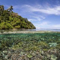 Raja Ampat coral and sky