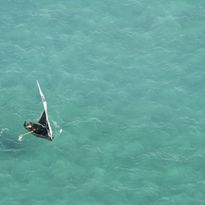 dhow sailing in Mozambique