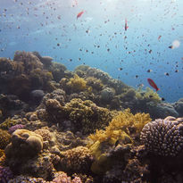 reef many fish header