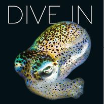 OD 2019 brochure cover