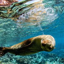 seal underwater