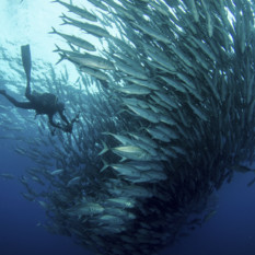 Scuba Diving with a School of Fish