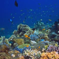 Coral Reef, Bali