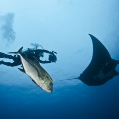 Underwater photographer with Manta Ray, Socorro Island
