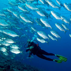 Men diving with fish
