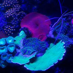 UV night dive