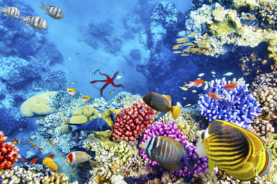 Hurghada Corals and Tropical Fish