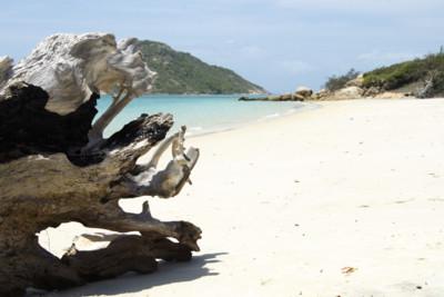 Lizard Island Driftwood