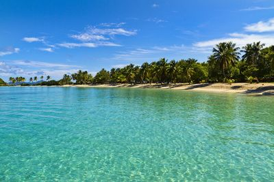 Palm tree island in St Vincent and the Grenadines