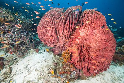 Coral reef at Moyo Island