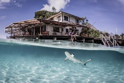 Shark swims at Misool Eco Resort in Raja Ampat, Indonesia