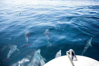 Dolphin Safari at Azura at Quilalea in Mozambique