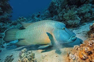 Diving Lizard Island, Australia