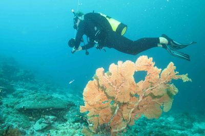 Diving past coral in Alphonse