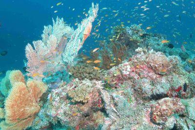 Healthy coral at Alphonse Island