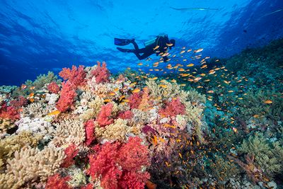 northern red sea diving