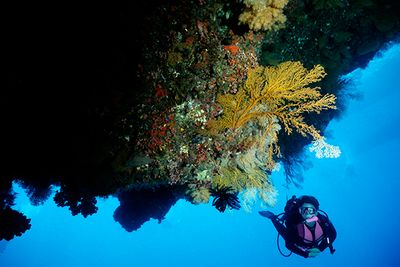 diving coral reef Australia