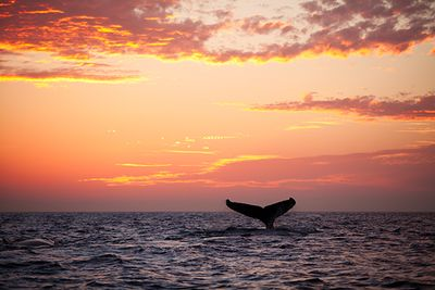 whale breaching at sunset in Mozambique