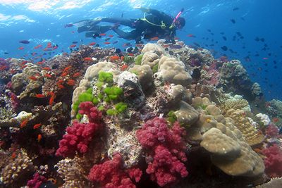 Soft coral reef, Fiji
