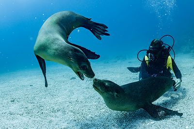 Diving with seals, Galapagos