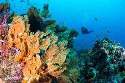 scuba diving alphonse
