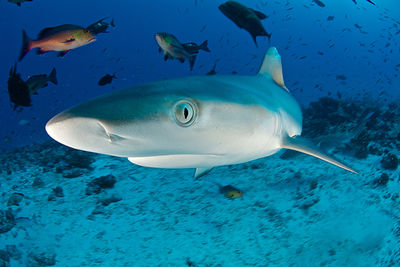 shark seychelles