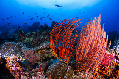 colourful_reef