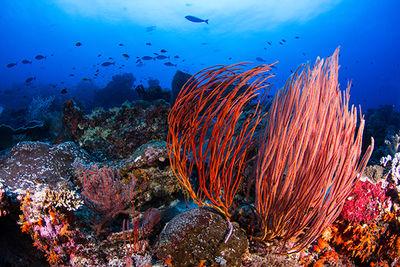 coral reef, Bonaire