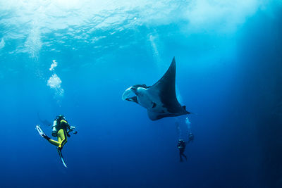 manta ray diving socorro