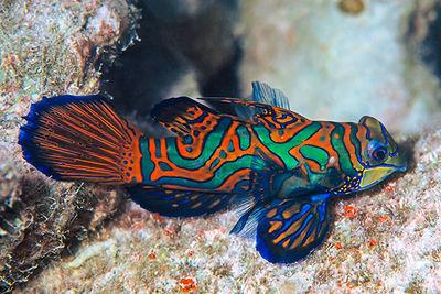 marine life new britain, papua new guinea