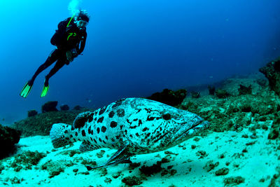 Grouper at Neptune's Arm