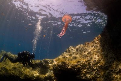 diving diver jellyfish
