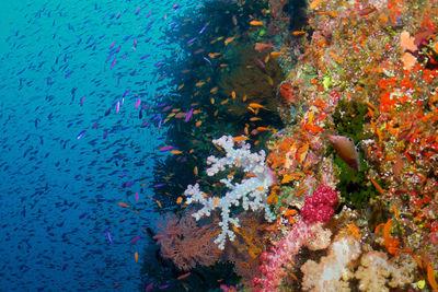coral wall fiji