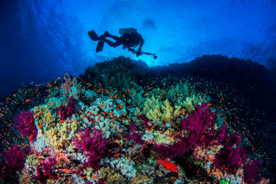 coral wall diver