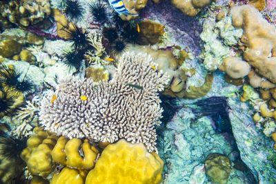 coral reef grenada